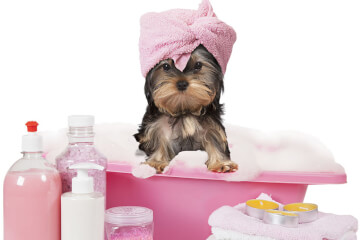 Dog being bathed